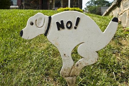 no-dog